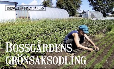 Bossgårdens grönsaksodling