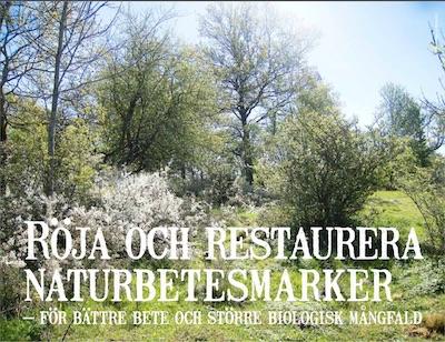 Röja och restaurera naturbetesmarker