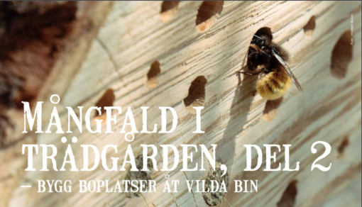 Bygg boplatser åt vilda bin
