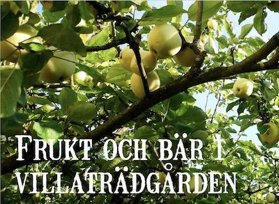 Frukt och bär i villaträdgården