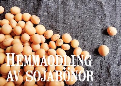 Hemmaodling av sojabönor